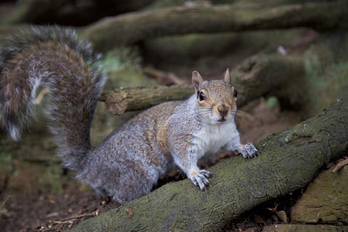 squirrel in Richmond
